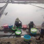 Producer-Salts harvesting , Srae Ambel commune